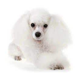 Plush pups pet grooming pet supply boutique dog grooming solutioingenieria Images