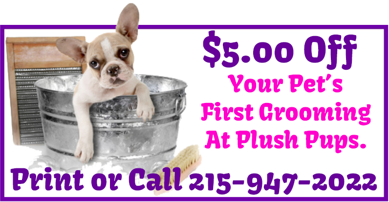 Save $5 Off First Time Crate Free Dog Grooming