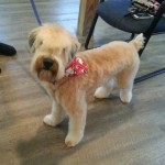 Pet Boutique and Pet Grooming